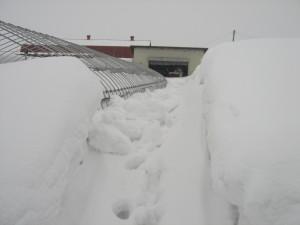 また雪に埋もれてしまいました・・・・