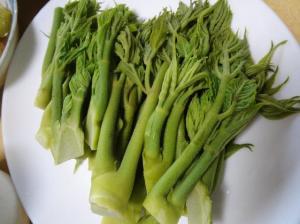 天然タラの芽、香りが違います。