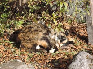 玄関脇の日だまりでネコが昼寝
