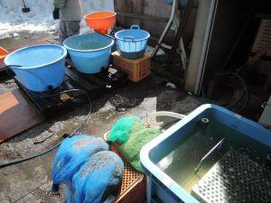 塩水選と温湯消毒