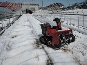 育苗ハウスの消雪作業