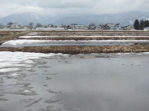 田んぼは雪解け水がいっぱい