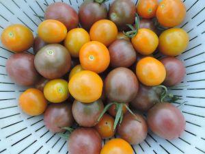 トマトがいっぱい