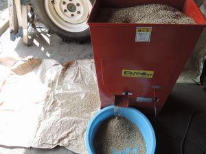 種籾の芒取りです。