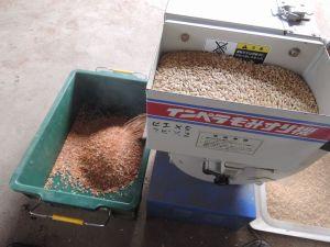赤米籾摺り
