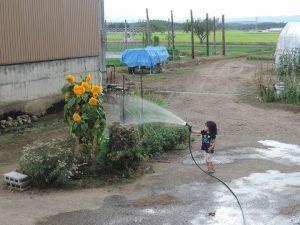 お花に水を