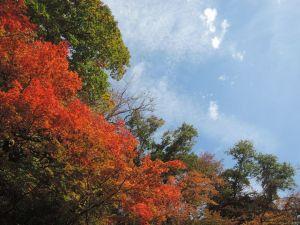 秋の宮の紅葉