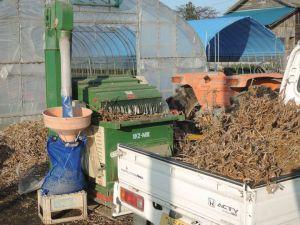 大豆の脱穀作業