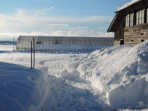 雪、まだ少ない