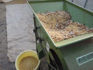 大豆の唐箕選