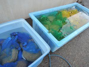 種まきまで水に浸ける