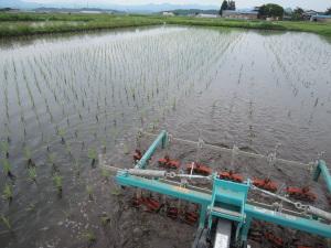 雨の中、除草作業