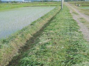 畔の草刈り