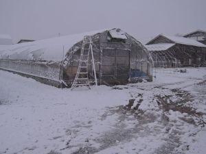 初雪積もった