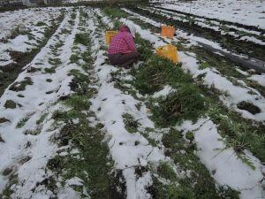 最後の収穫