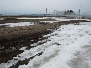 だいぶ雪が融けました。