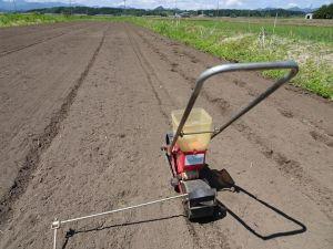 雑穀種播き完了