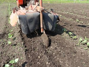 豆畑の中耕