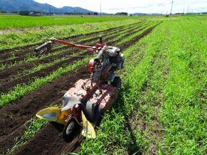 雑穀の培土